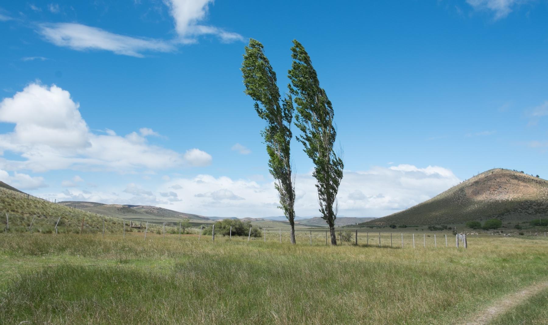 Two Trees - Patagonia