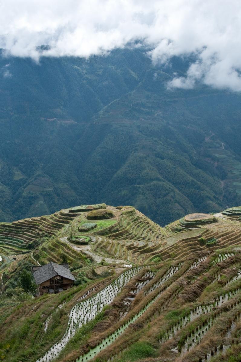 Rice Terraces at Longsheng